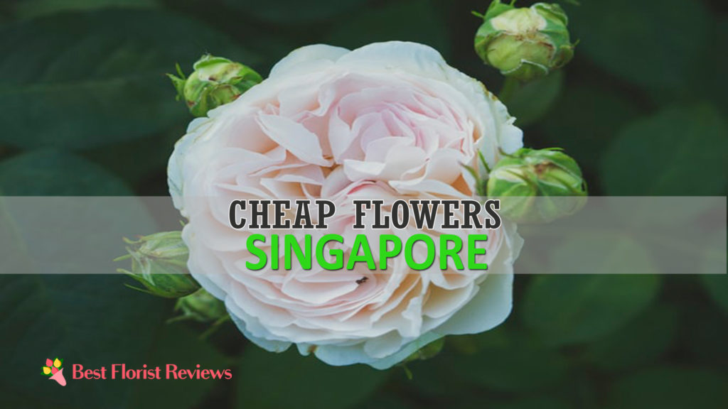 Best Cheap Flowers Singapore